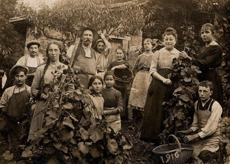 Photo des vendanges de 1916